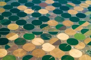 irrigatedagriculture