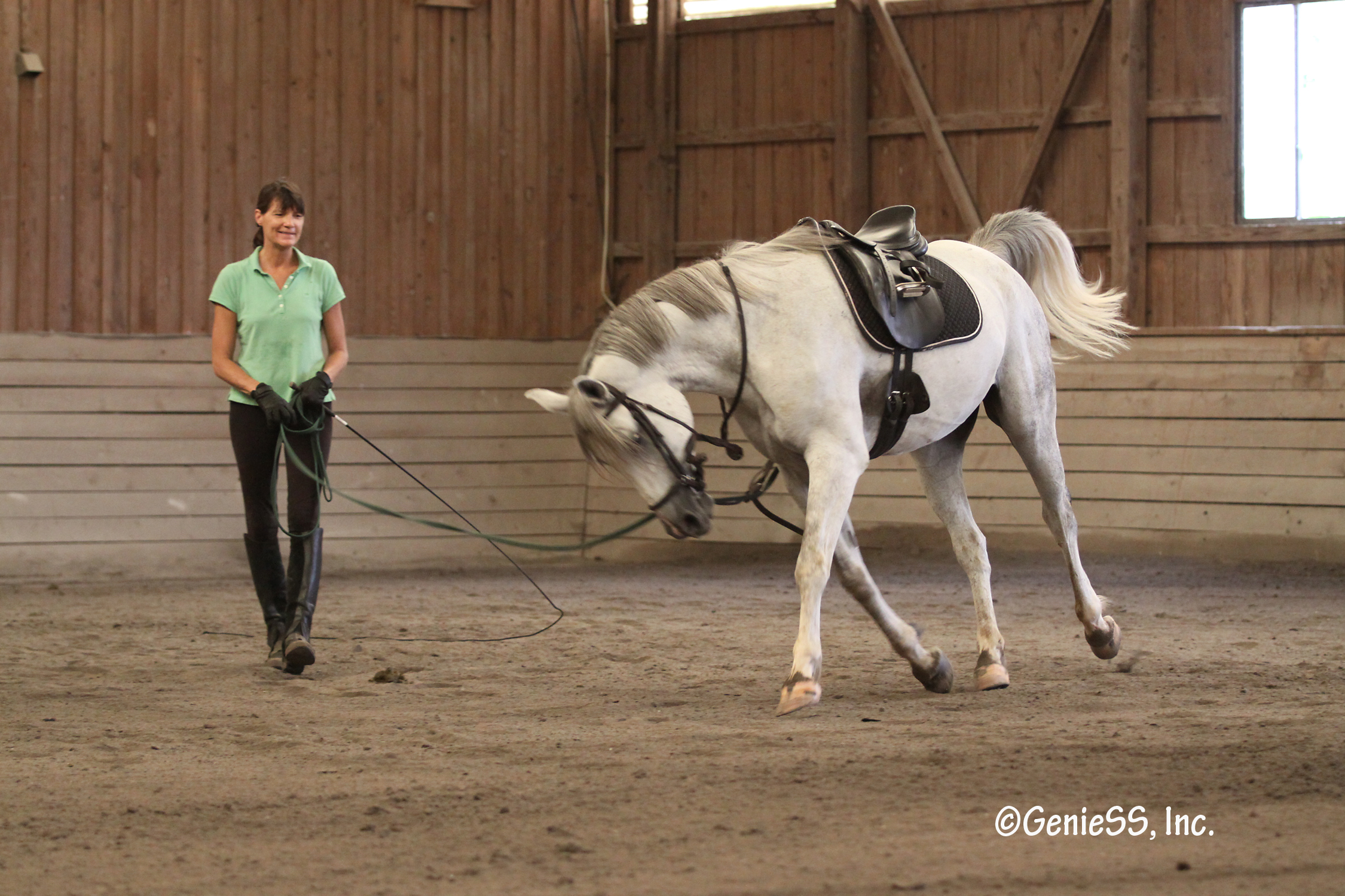 Lunging Trey1 Longing a Horse
