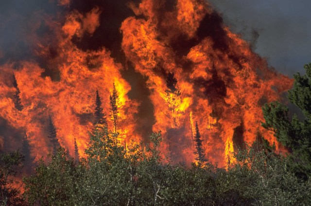 See how huge a canopy fire is? Photo Source