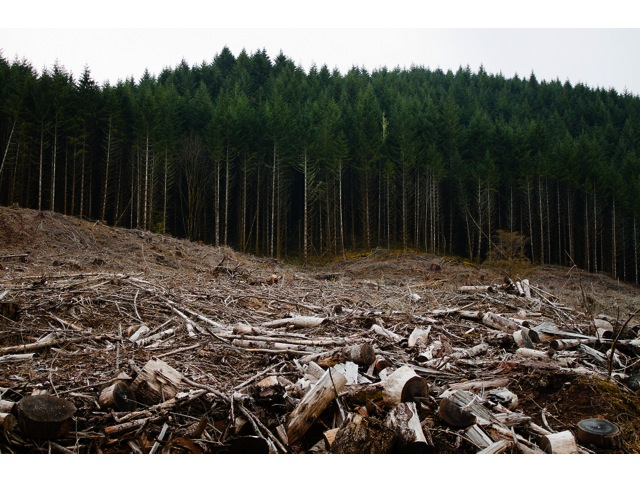 Clearcutting - Looks bad, can do good