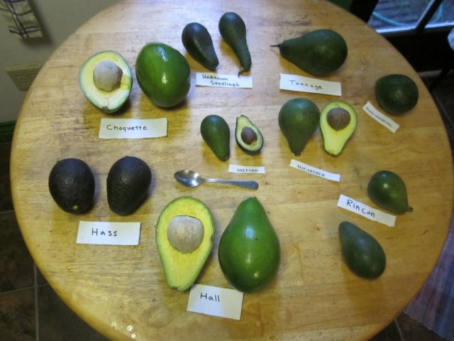 AvocadosVarieties