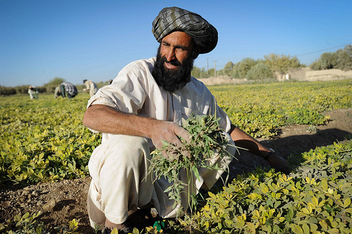 A farmer in Afghanistan with his harvest Photo source