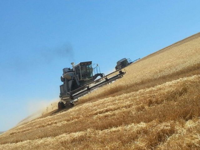 Harvesting wheat on Lewiston Hill. Look at that angle!