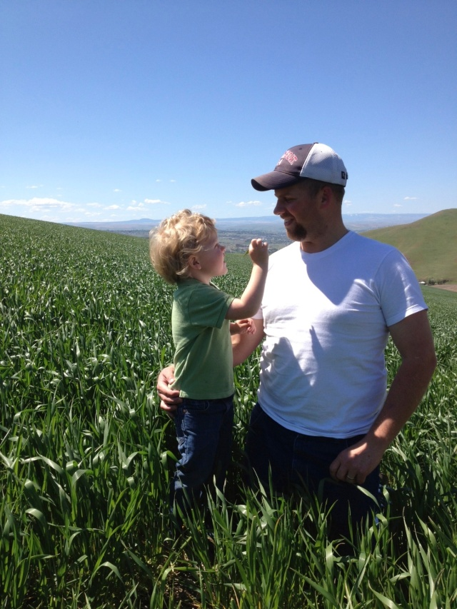 Checking wheat with his future farmer!