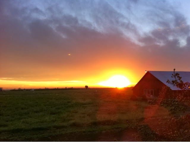 Beautiful photo from Live on a Real California Dairy Farm