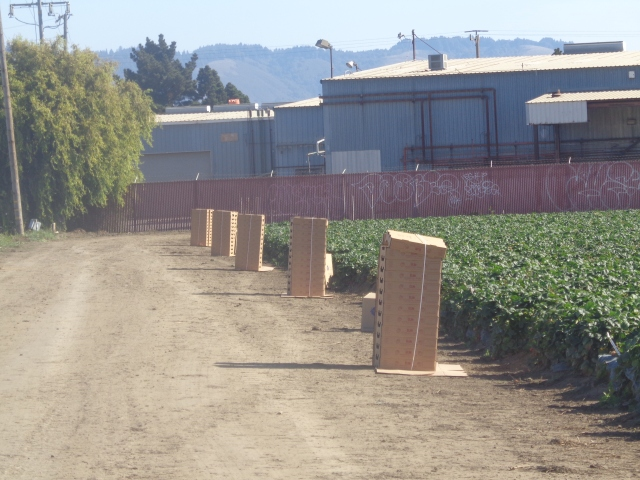 Shipping boxes waiting to be filled up with strawberries