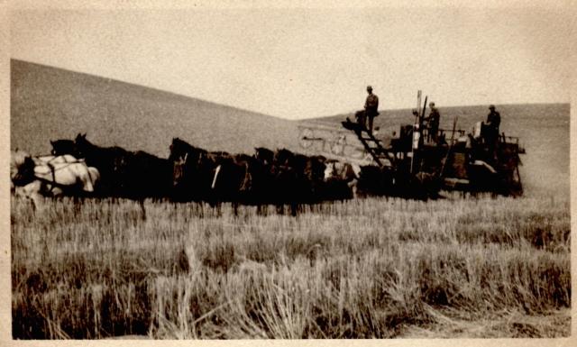 Whitman 1914