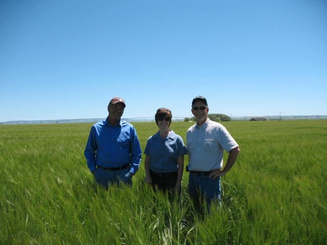 A barley field day