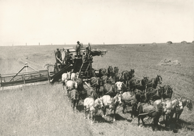 Horse drawn combine Photo source