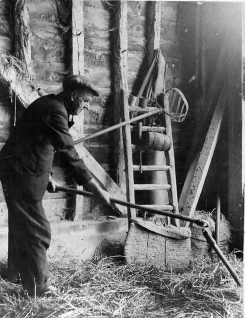 Threshing grain by hand. Photo source