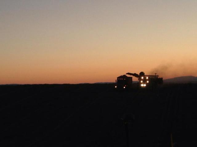 Up before the sun to get the harvest in!
