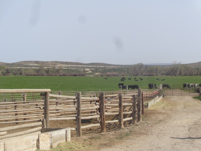The working corrals with the cattle grazing in the distance.