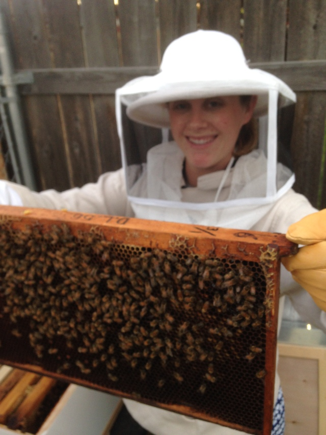 A frame of bees from the first hive
