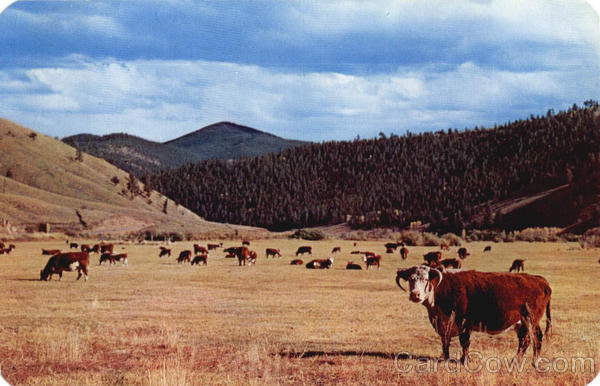 Cattle On The Range
