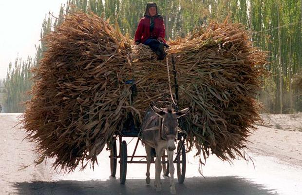 Donkey-cart-corn_1410276i