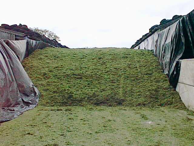 silage3