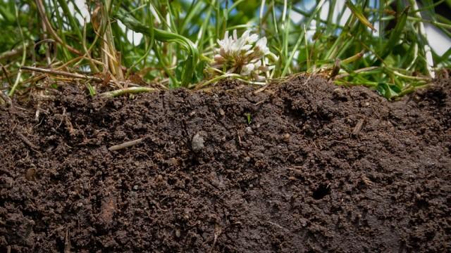 The-Surprising-Healing-Qualities-of-Dirt