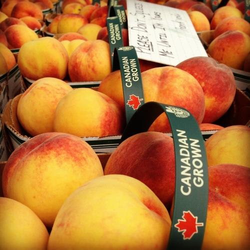 07_17_15_chelsey_peaches_500_500_s_c1_c_c