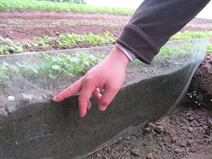 irrigationingreenhouseagronomistkimjiseokpointstosoilwithtraceirrigationthatismoistbutnotwet