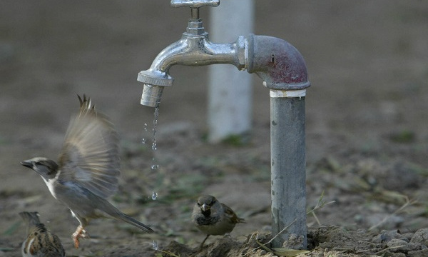 Birds gather around a water faucet in ce