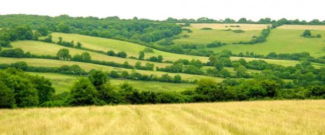 FARMLAND Lower_kingcombe_Dorset_WT_cpt_Steve_Davis