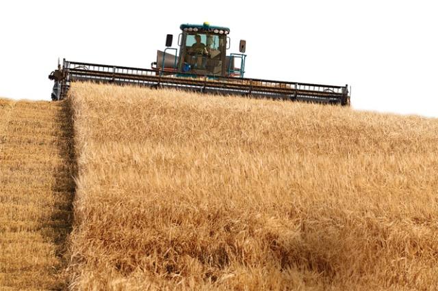 combine tractor in action; three hills, alberta, canada